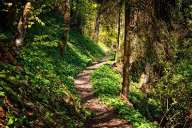 hiking trail 2