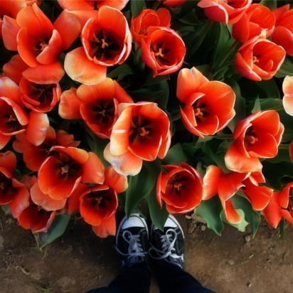 flowerbloom
