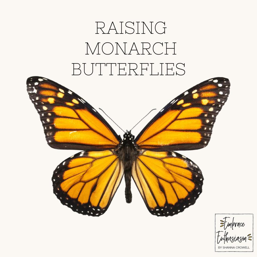raisingmonarchbutterflies