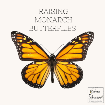 raisingmonarchbutterflies
